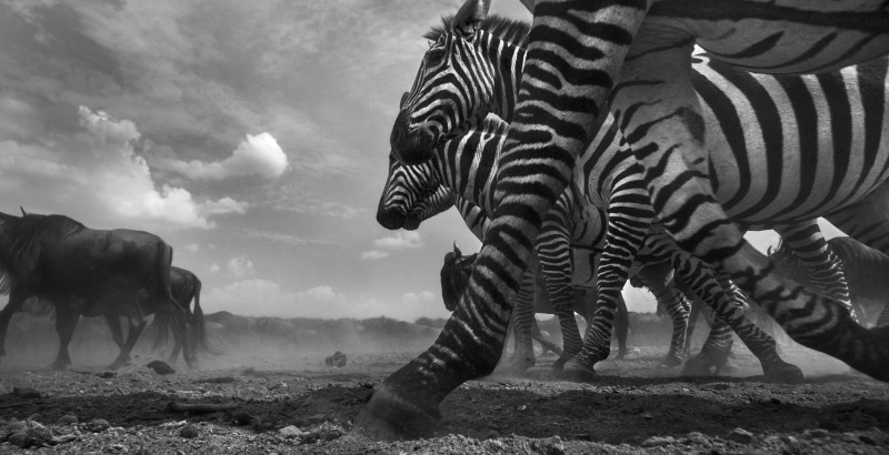 ANUP SHAH, MOMENTUM, FROM THE MARA SERIES, 2013
