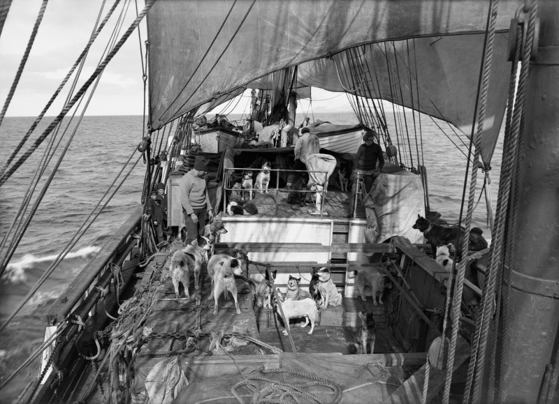 Herbert Ponting, VIEW OF THE DECK ON THE TERRA NOVA WITH DOGS, FROM ENGINE ROOM HATCH, 3 JANUARY 1911