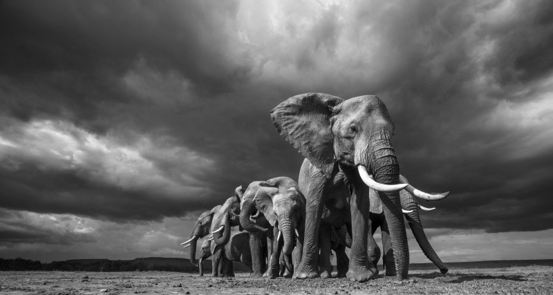 ANUP SHAH, STEADFAST, FROM THE MARA SERIES, 2012