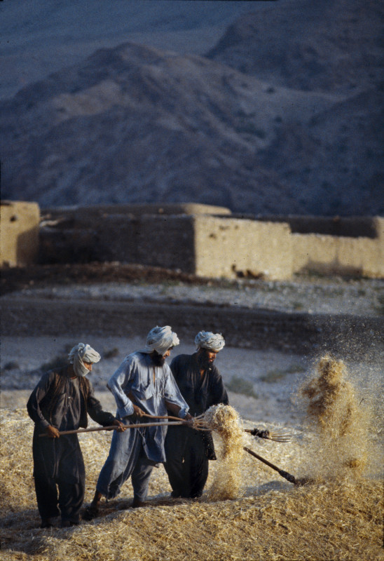 Steve McCurry, MEN RAKING HAY, BALUCHISTAN