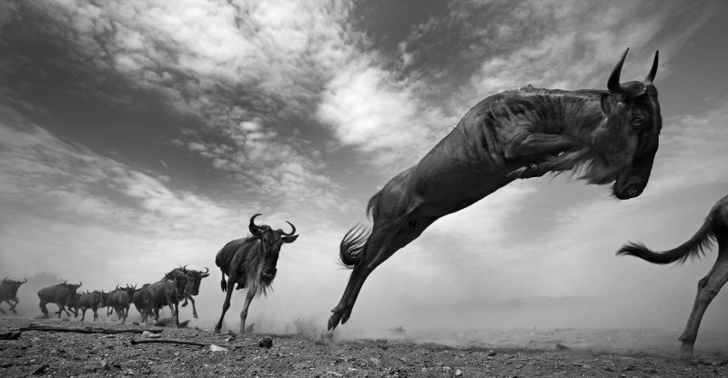 ANUP SHAH, THE SEEKERS, FROM THE MARA SERIES, 2013