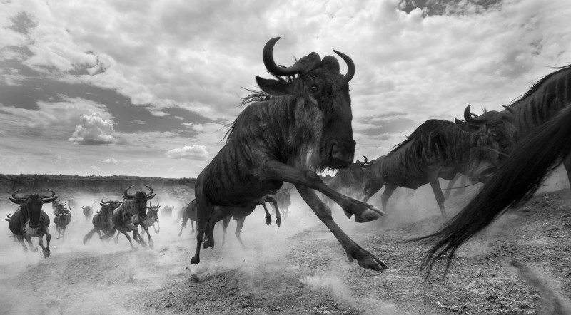 ANUP SHAH, CHASING RAIN, FROM THE MARA SERIES, 2009