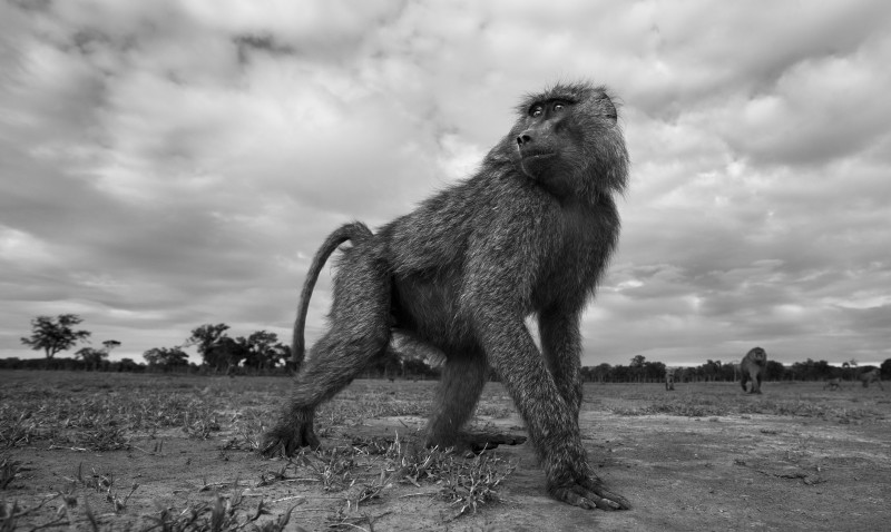 ANUP SHAH, SUSPICIOUS, FROM THE MARA SERIES, 2012