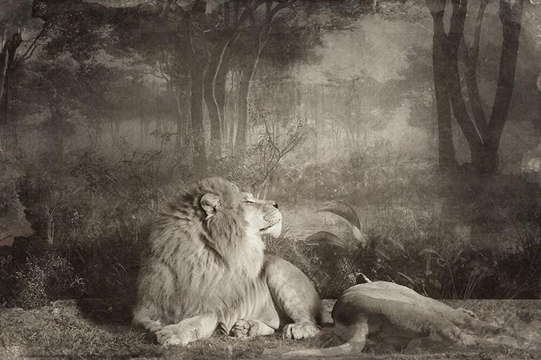 Jan Gulfoss, LION COUPLE