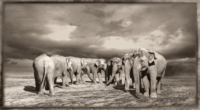 Jan Gulfoss, ELEPHANT TURN