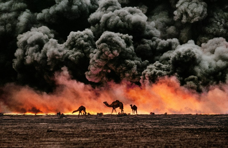 Steve McCurry, CAMELS AND OIL FIELDS, AL AHMADI, KUWAIT, 1991