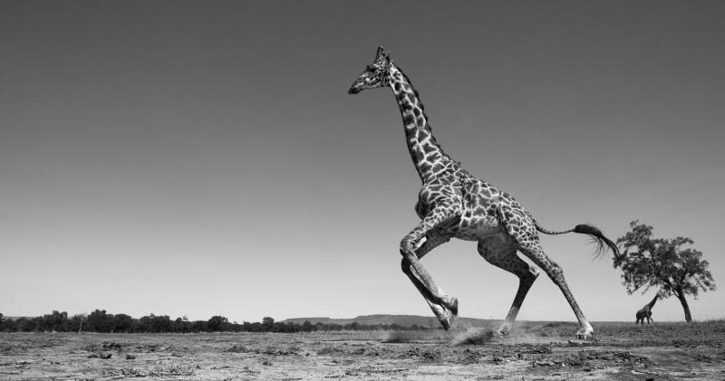 ANUP SHAH, DANCE, FROM THE MARA SERIES, 2012