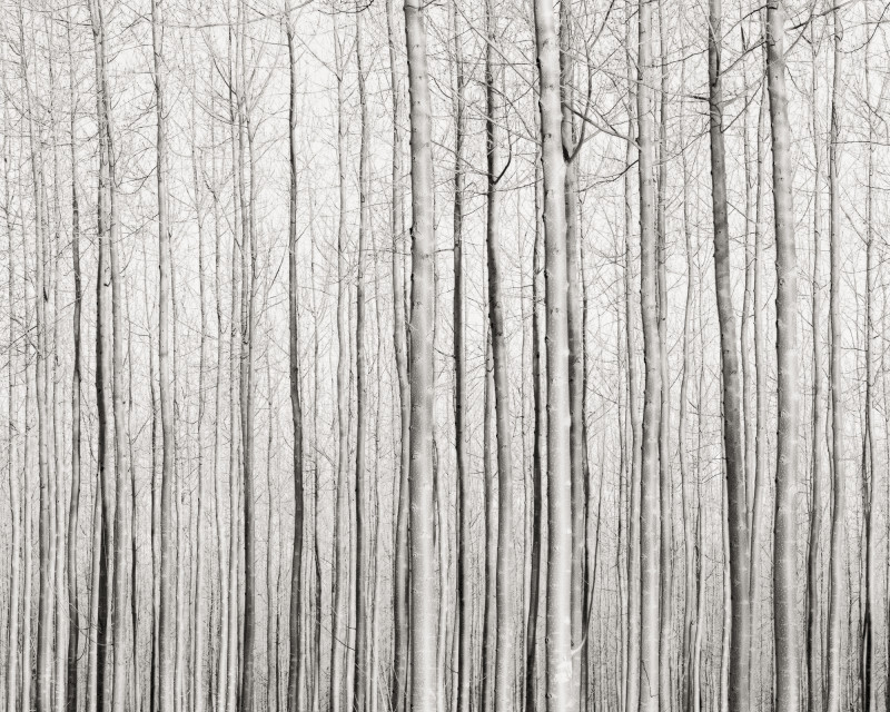 Jeffrey Conley, TREES AND SHADOWS, OREGON, 2016