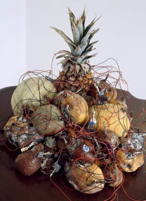 Jo Coupe, Enough Rope, 2004