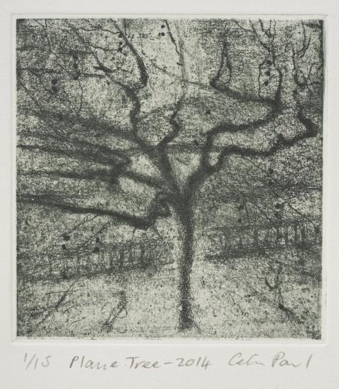 Plane Tree, 2014