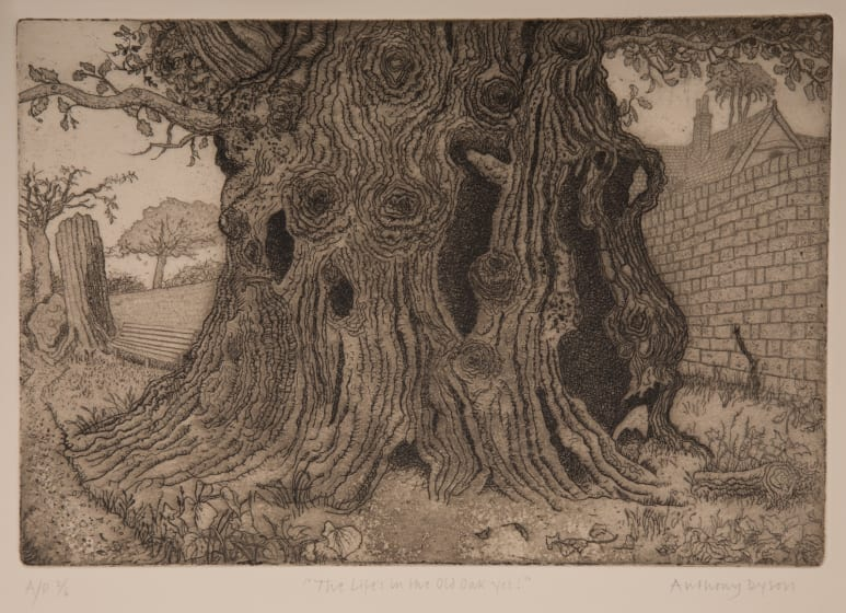 Anthony Dyson RE Theres Life in the Old Oak yet etching & aquatint 40 x 49cm