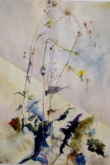 "<span class=""artist""><strong>Sophie Knight RWS</strong></span>, <span class=""title""><em>An Urban Weed, Dandelion</em></span>"