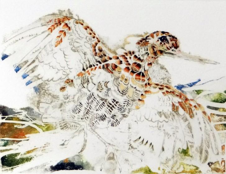 Rosamund Jones RE Woodcock etching 26 x 21cm 4/25