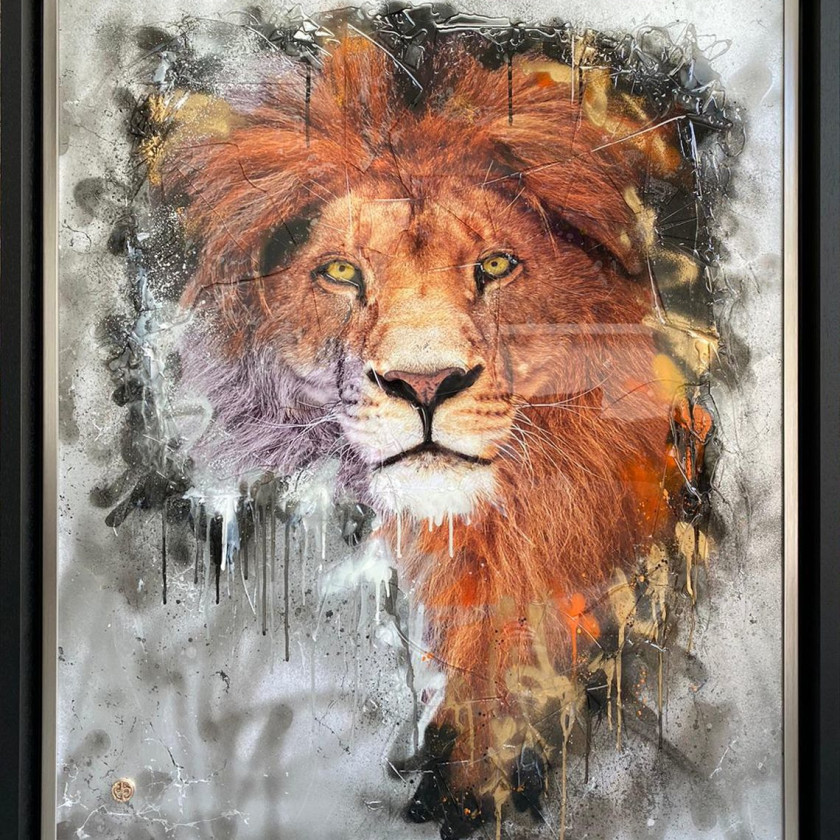 African Lion, 2020
