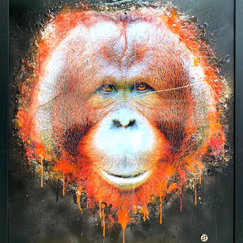 Bornean Orangutan, 2020