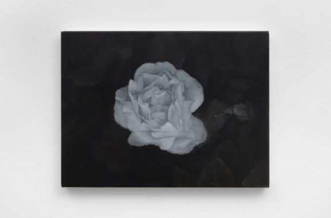 唐·布朗:花