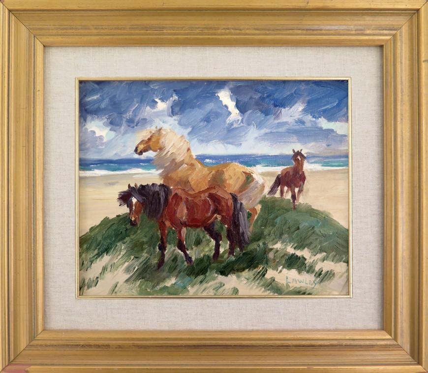 Sable Island Ponies