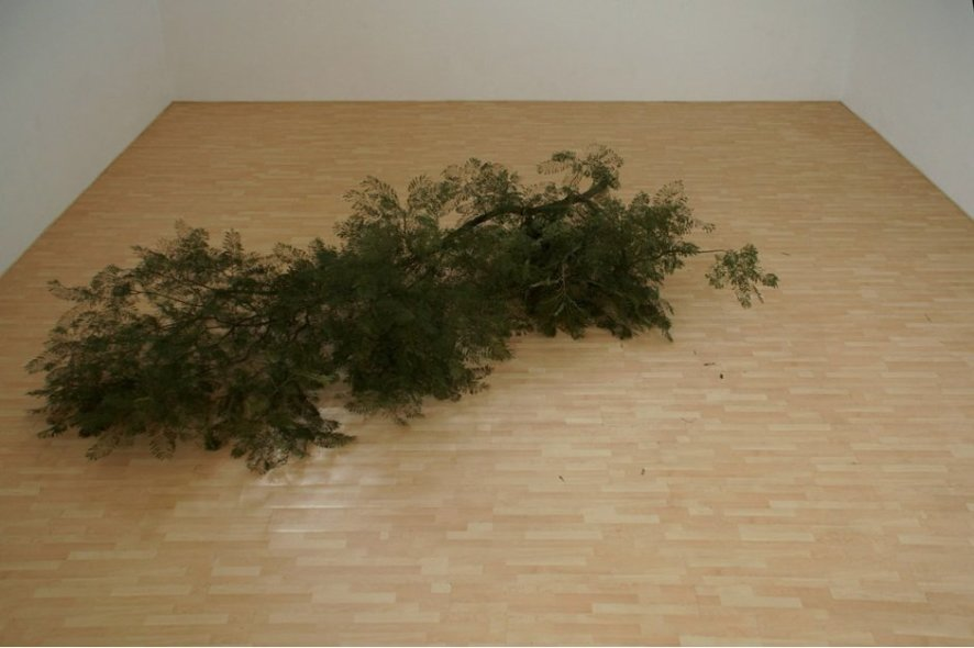 Fake Pine Branch on Fake Pine Floor