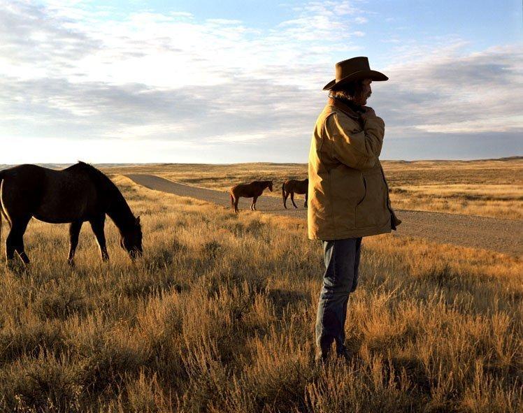 Horses Duke