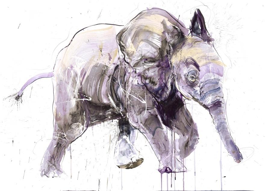 Young Elephant II