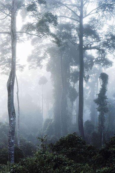 <strong>Axel Hütte</strong>, <em>Danum Valley-1, Borneo</em>, 2008