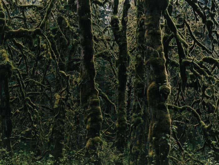 <strong>Axel Hütte</strong>, <em>Nitinaht - 2, Canada</em>, 2007