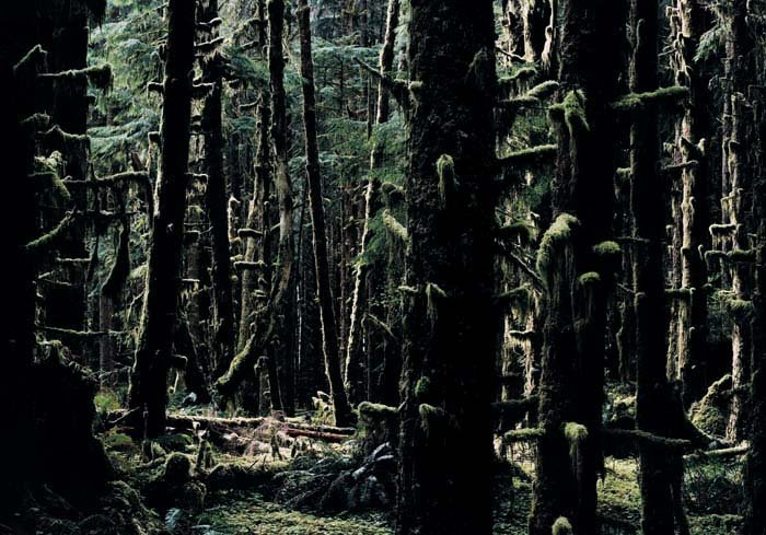 <strong>Axel Hütte</strong>, <em>Hoh Rain Forest - 2, USA</em>, 2007