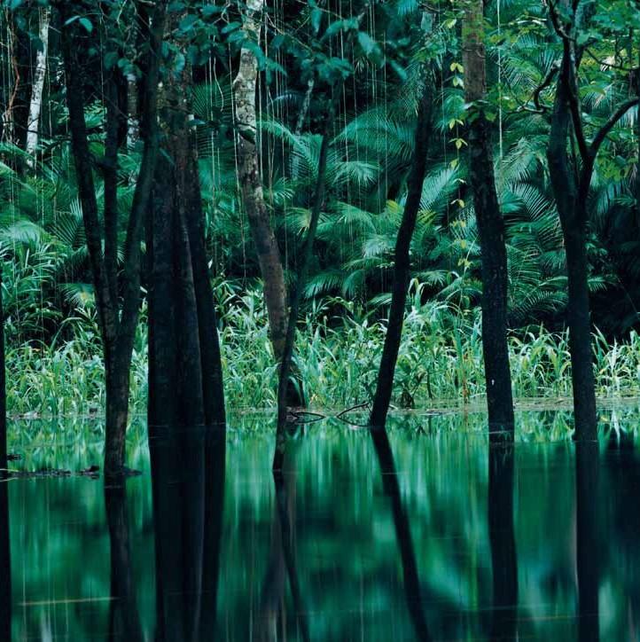 Axel Hütte, Rio Negro II, Brasilien, 1998, Courtesy Galerie Nikolaus Ruzicska, Salzburg und Axel Hütte/Schirmer/Mosel, München © Axel Hütte, Foto: © Axel Hütte (Ausschnitt)