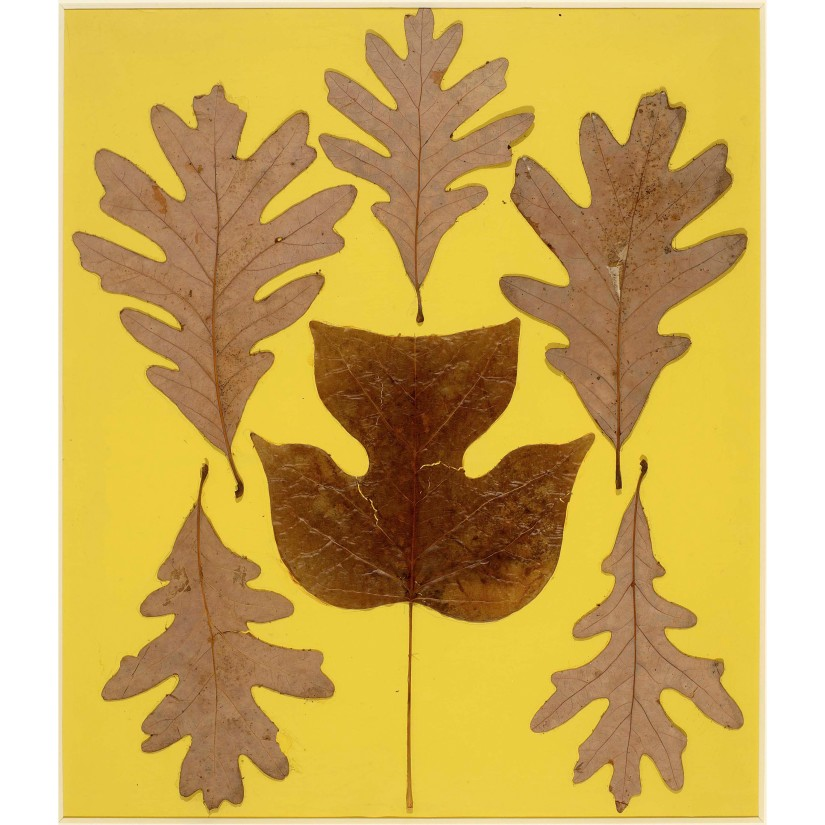 Josef Albers, Leaf Study IX, c.1940, Leaves on paper, 26 x 24 3/4 in © The Josef  and Anni Albers Foundation