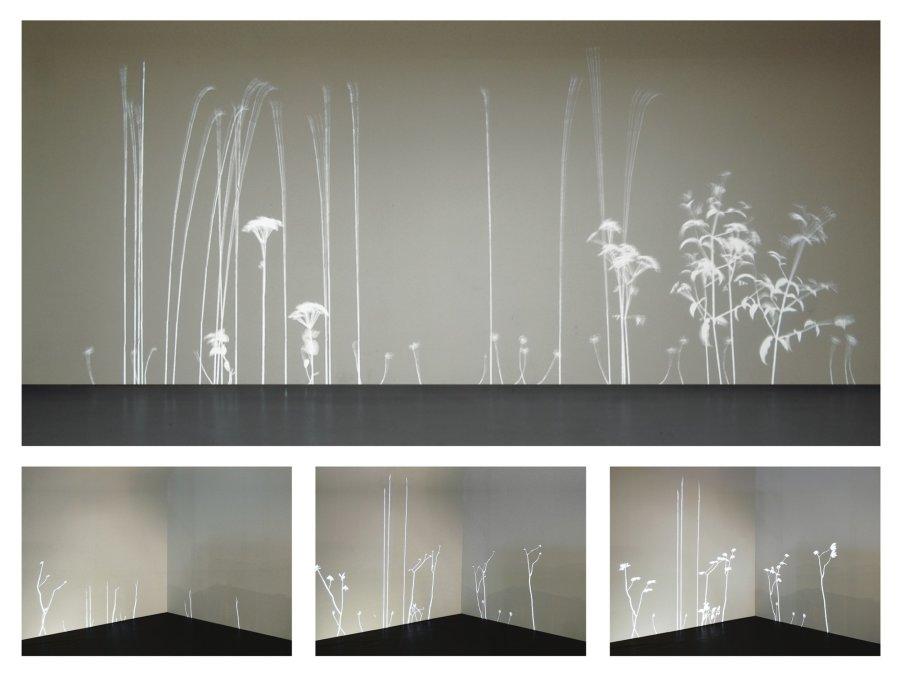 <p>Lightweeds by Simon Heijdens, 2006. Photography by Simon Heijdens</p>