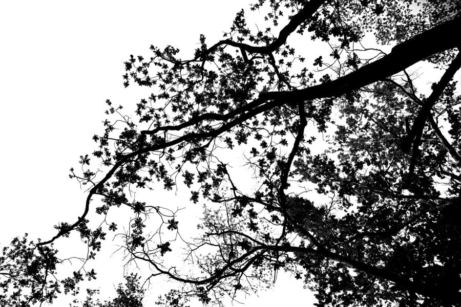 <p>Rendering of Branches by Simon Heijdens, 2010</p>