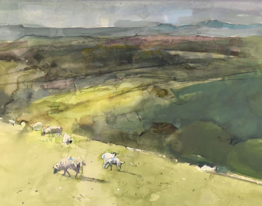 Sheep & Cloud Shadows, Eggardon