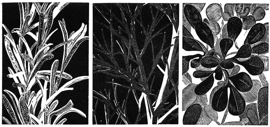 Ophelia's Herbs