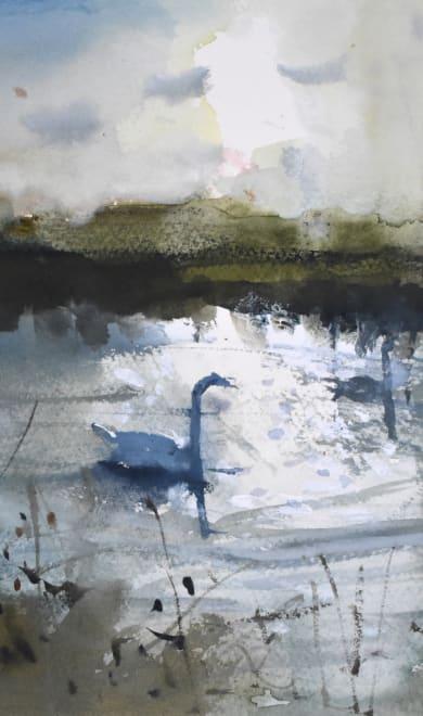 Stour Swans, Winter