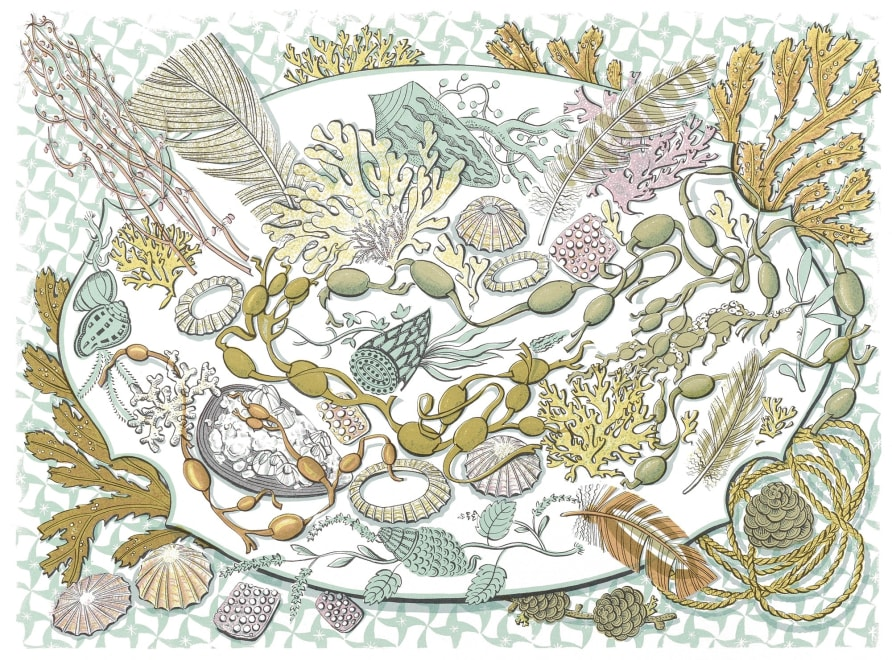 Shell, Seaweed and Feather