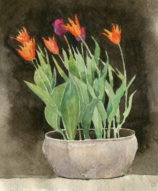 Tulips on the table
