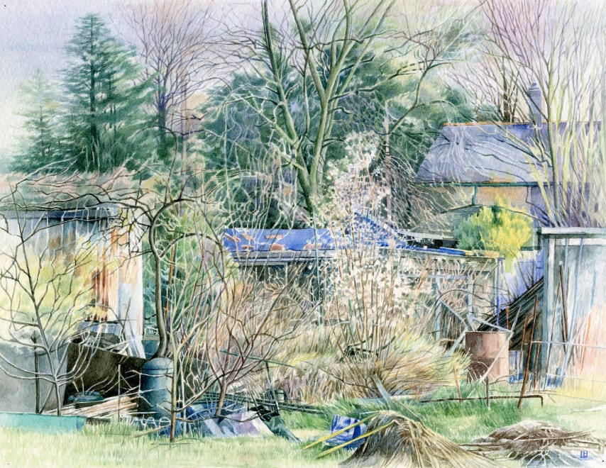 Spring at the Allotments