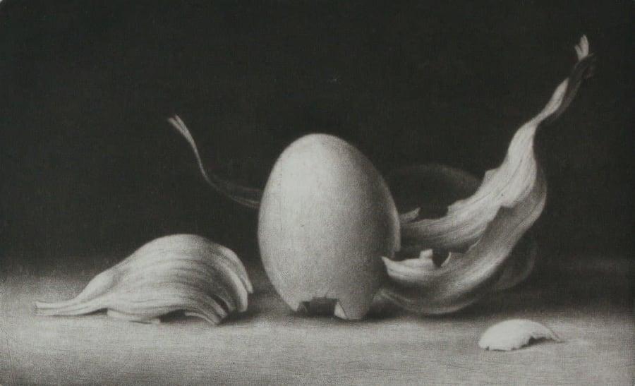 Shells no. 7