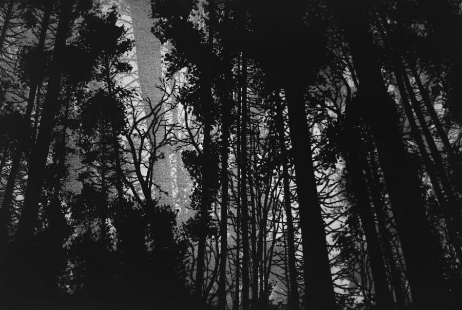 Pitts Wood, Tisbury