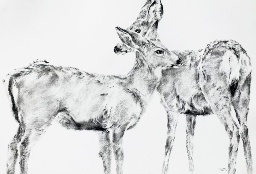 September Vhay, Deer Run Radiance One