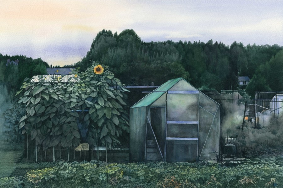Dusk at the Allotments