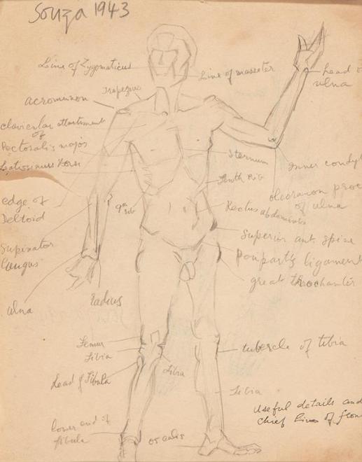 Francis Newton Souza, Untitled (Human anatomy study), 1943