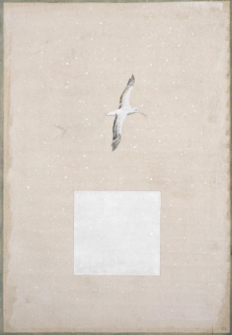 Elisabeth Deane, Albatross Snow Dream, 2017