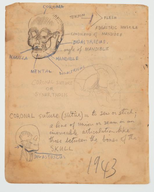 Francis Newton Souza, Untitled (Anatomy Study ) verso ; Untitled recto, 1943
