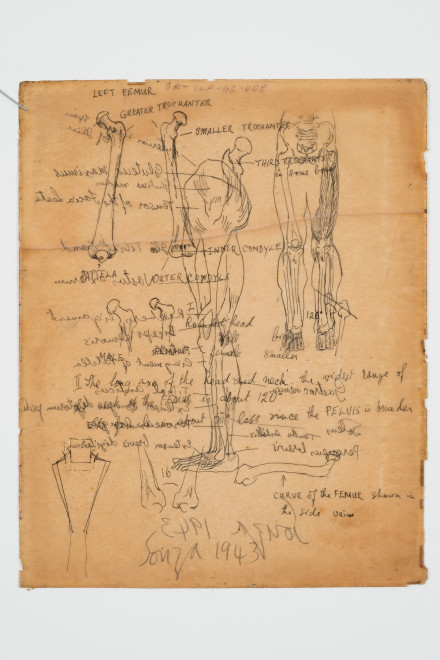 Francis Newton Souza, Untitled (Anatomy Study ) verso ; Untitled recto, 1943