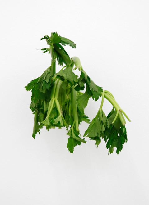 KARIN SANDER, Celery (Kitchen Pieces), 2011 / 2015