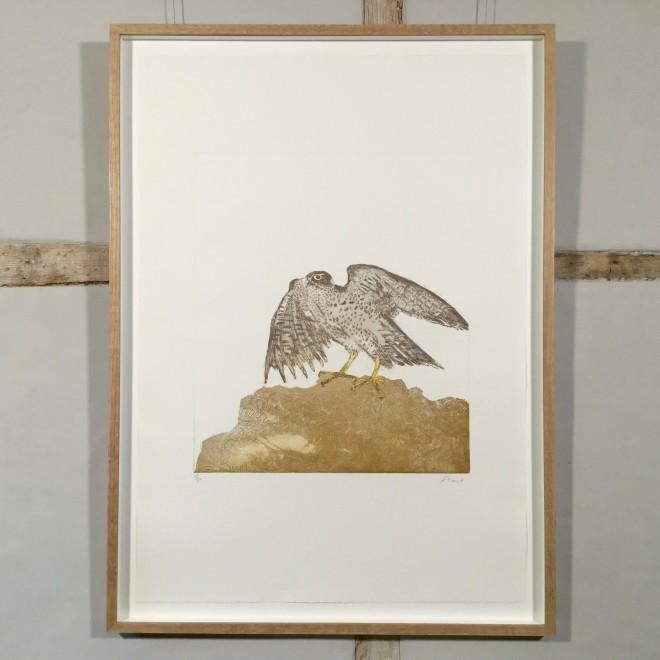 Goshawk, from Birds of Prey