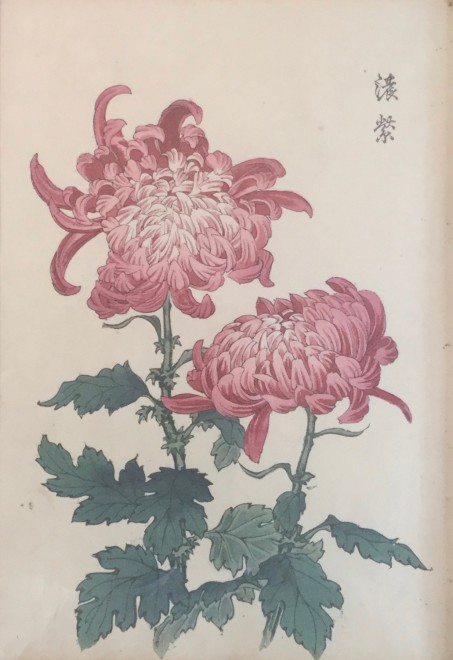 One Hundred Years of Chrysanthemums X