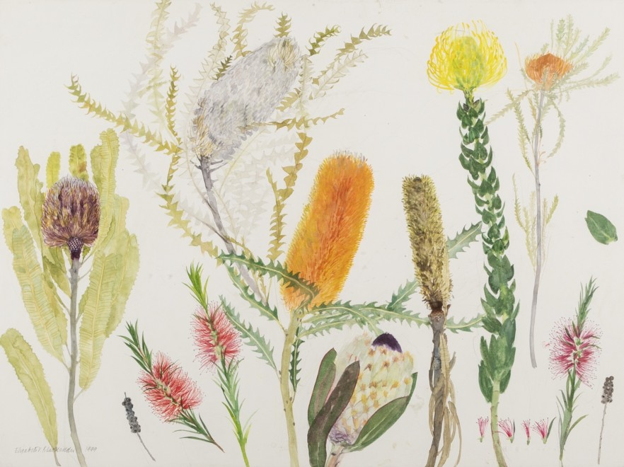 Banksias and other Australian Plants
