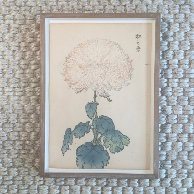 One Hundred Years of Chrysanthemums II